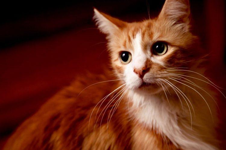 Farewell Mr Puss